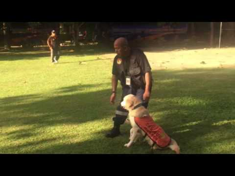 AK9 Dog Training Center - Jakarta Rescue BNPB & Ak9 bersiner