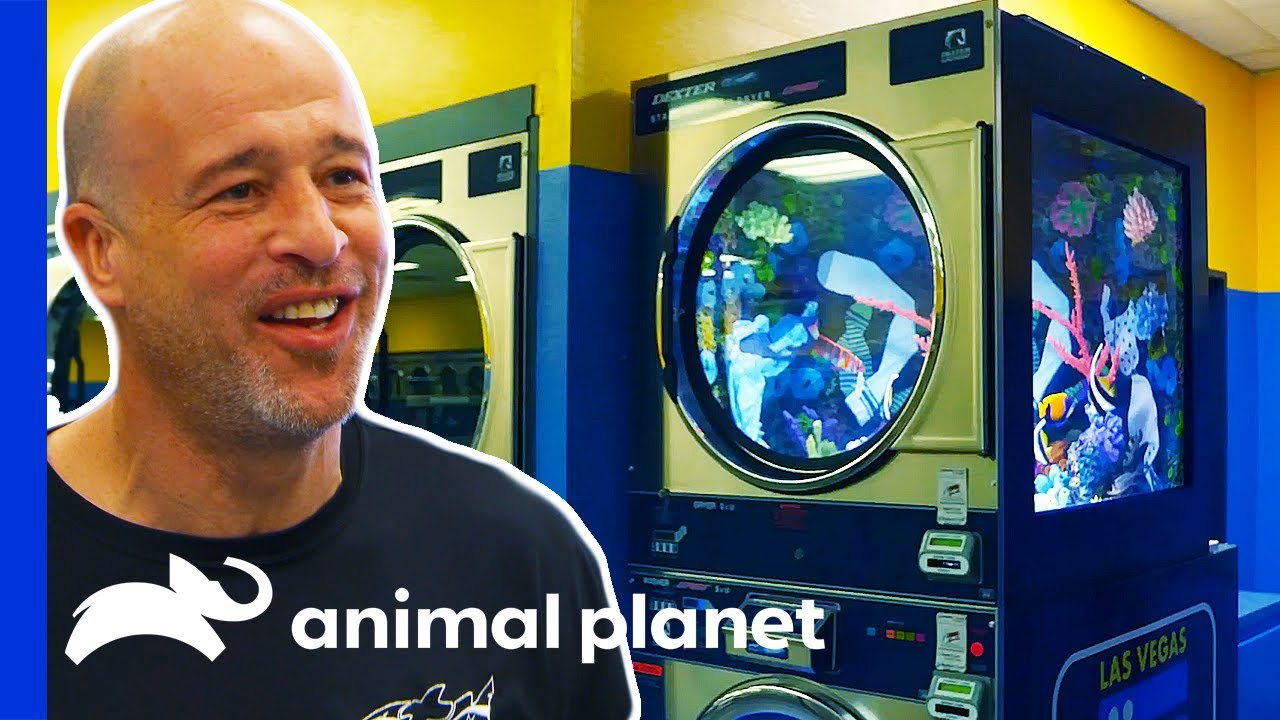 Download Washer Dryer Turns Into a Colorful Fish Tank!   Tanked