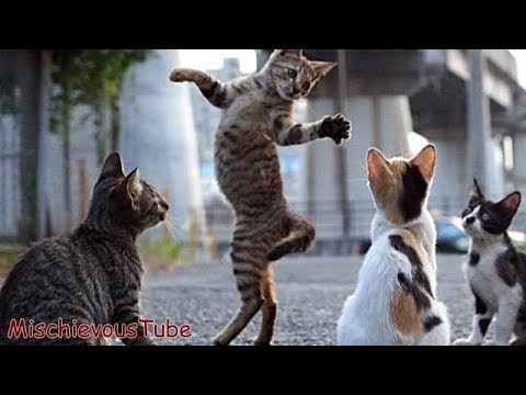 See these Funny Dancing Cat and Dogs | Try Not to Laugh or Grin– Funny Animal Vidoes
