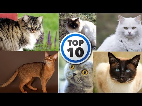 Top 10 beautiful cats Breeds in the world l Ultimate Pets Channel