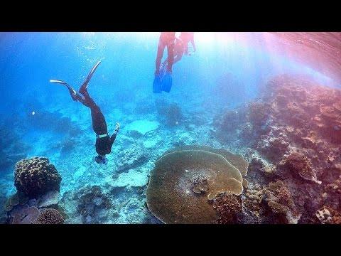 Büyük Set Resifi Tehdit Altında