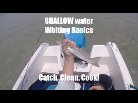 Easiest Way To Catch, Clean, Cook Whiting! SHALLOW WATER - Gold Coast Fishing Vlog