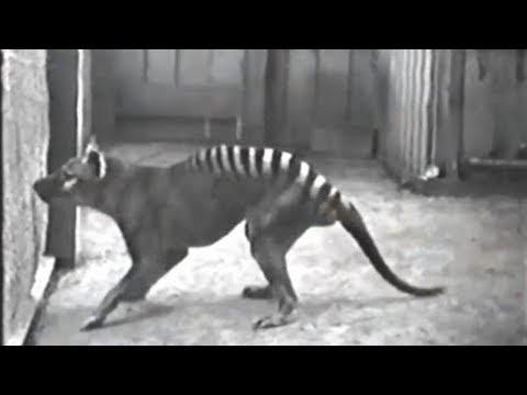 10 Rare Videos of Extinct Animals