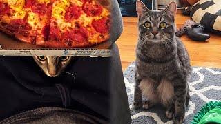 Пара взяла домой бродячего кота, но вскоре в его поведении начали проявляться невероятные странности