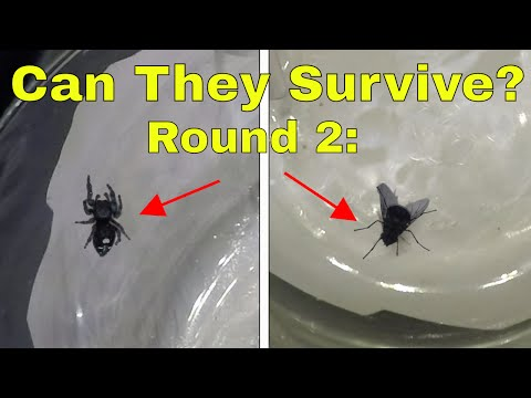 Round 2: What Happens When You Put a Fly and a Spider In a High Pressure Chamber? Will They Survive?