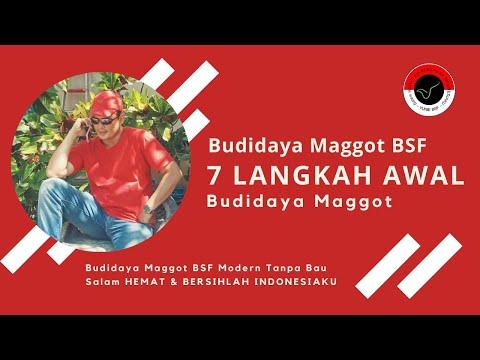 7 Langkah Awal Budidaya BSF - Budidaya BSF Modern TANPA BAU!