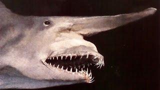 【巨大生物】巨大な世界のヤバいサメ10選【ホホジロザメ・ラブカ】