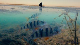 Зимняя рыбалка 2016-2017. Поклевки окуня на мормышку. Подводные съемки