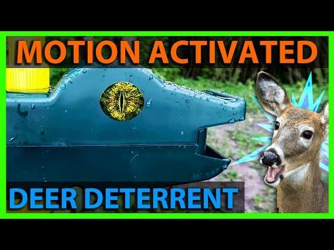 My Motion Detector Sprinkler Setup To Keep Deer Away From Garden! Hoont Sprinkler