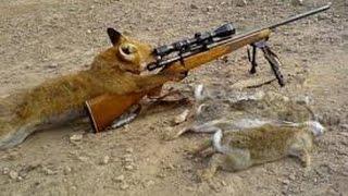 Охота на лис петлями.ставим петли +на лису,петля +на лису.