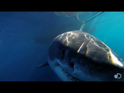10 Best and Worst Shark Week Specials, From 'Air Jaws' to 'Megalodon