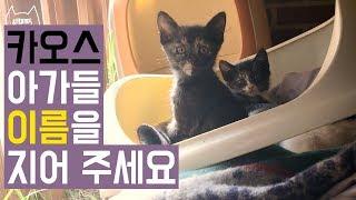 길고양이 마고의 카오스 아기 고양이 이름을 지어 주세요 calico kittens / 째폴보&프렌즈 숏튜브