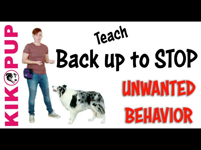 STOP UNWANTED behaviors with BACK UP! - Dog Training