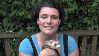 How to tame a ferret - www.Ferret-World.com