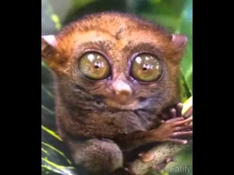 Grosse Augen Kleiner Affe Youtube