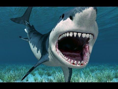 Акуленок я туруруруру