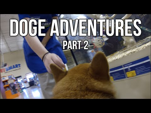 Doge Adventures: Ozy Goes to Petsmart & Meets Fans!