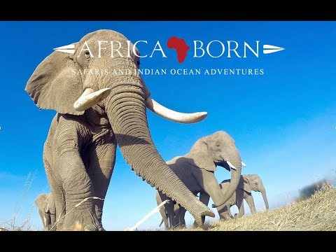 Safaris with Africa Born - Playing with elephants and a #gopro