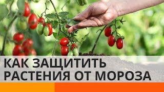 Украинские студенты разработали уникальный аграрный проект