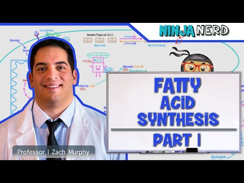 Metabolism | Fatty Acid Synthesis | Part 1