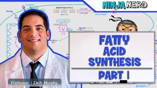 Metabolism  Fatty Acid Synthesis  Part 1
