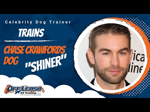 CHACE CRAWFORD FROM GOSSIP GIRL SENDS HIS DOG TO TOM FOR 7 DAYS!
