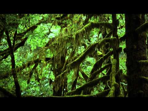 """Forests"" a film by Louie Schwartzberg (excerpt 1)"