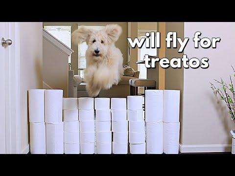 Floof Dog vs Toilet Paper Wall!