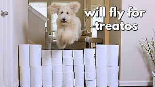 Floof Dog vs Toilet Paper Wall!