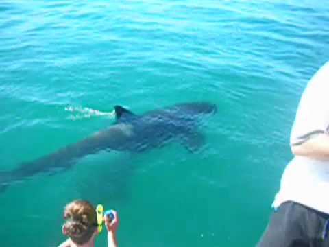 Swimming With Orcas New Zealand