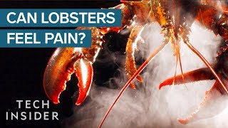 connectYoutube - Why Do We Boil Lobsters Alive?