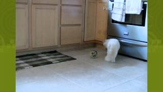 Video PetSolutions: Play-N-Squeak Ball of Furry Fury Cat Toy download MP3, 3GP, MP4, WEBM, AVI, FLV September 2018