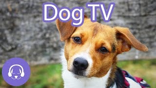 Dog TV: Forest Virtual Dog Walk - Entertainment for Dogs (12 Hours)