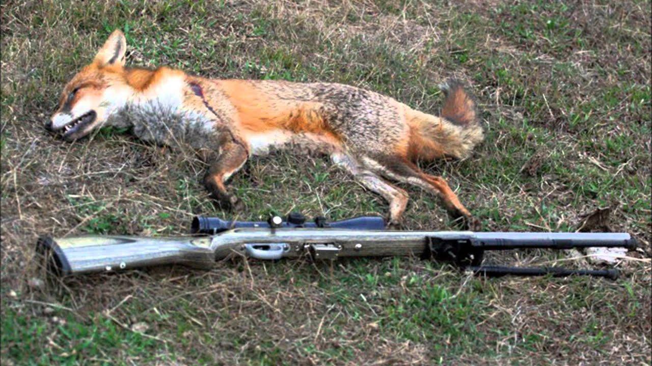 Feralr Cat And Fox In Australia