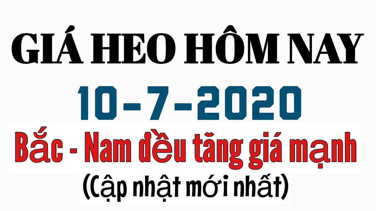 Cập nhật giá heo hơi hôm nay 10/7/2020   Bắc Nam đều tăng giá mạnh hôm nay
