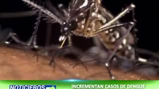 Incrementan Casos De Dengue Y Chikungunya En Sacatepéquez