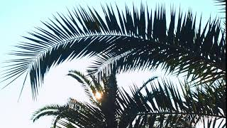 Palm leaves swaying in the sun. Free stock video. Full HD footage Free. Rec.709 1080p 60fps #17