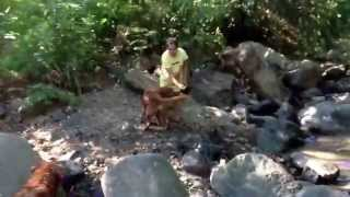 Golden Retriever - Stone Searching Exercise