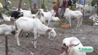 Les préparatifs de la Tabaski au Bénin