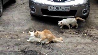 Кошачье групповое  порно