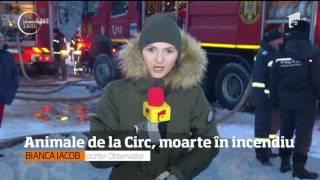 Un incendiu puternic a ars o hală al circului Globus. 11 animale au decedat.