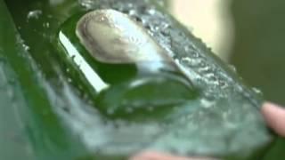 Skinfood - Bộ dưỡng xương rồng Agave cactus Thumbnail