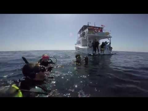 Viaje de Buceo en Arrecife Alacranes