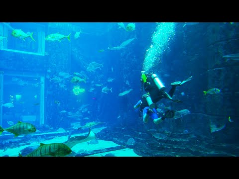 Atlantis the Palm   The Lost Chambers Aquarium   Dubai   Travel vlog
