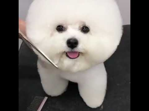 Balaca Sirin It Sweet Dog Youtube