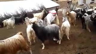 Gambar cover erhan çoban