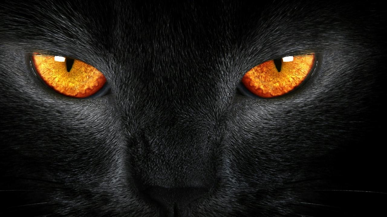 BLACK CAT S Live Stream