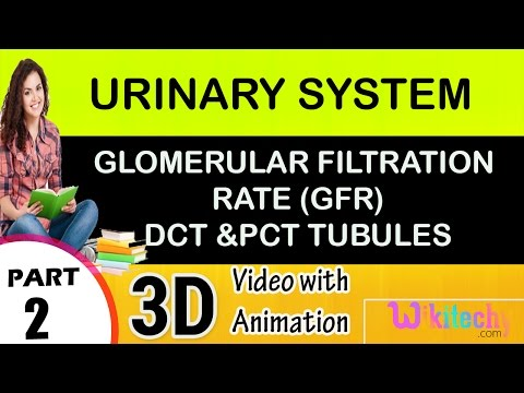 Glomerular filtration rate (GFR),DCT &PCT Tubules Urinary System class 12 11 10 9 8 7 6 cbse