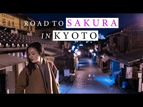 Road To Sakura In Kyoto | Travel With My Dear | Kyoto Vlog | 4K