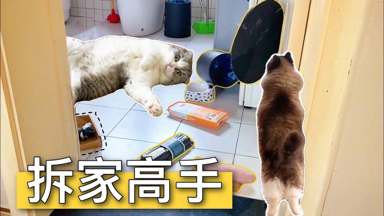 """【李喜貓】把15隻貓單獨留在家4天會發生什麼?打開門瞬間我被""""感動""""哭了"""